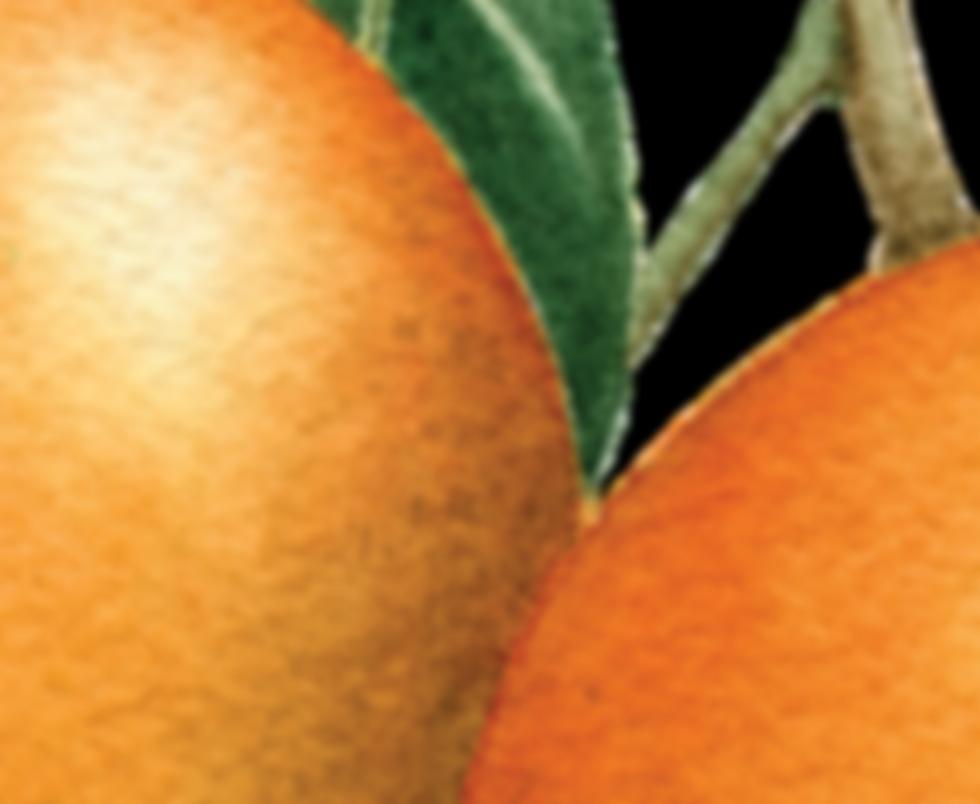Mango png (1).png