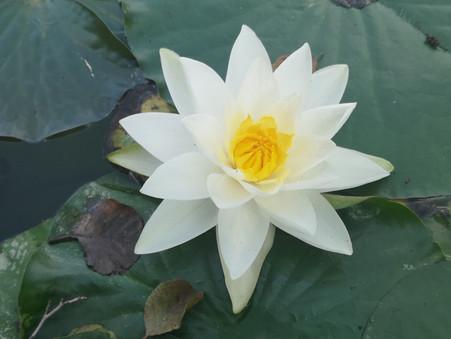 ImpulsTag: In der Ruhe liegt die Kraft -  Tiefenentspannung, Achtsamkeit & Stille