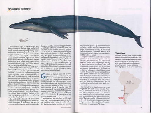 Blue whale / National Geographic
