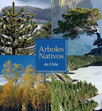 Árboles_nativos_de_Chile.jpg