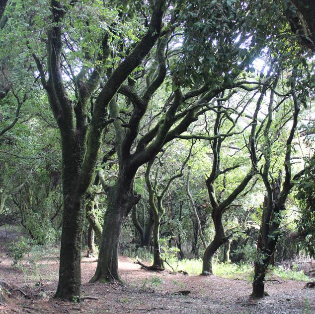 Santuario Península de Hualpén