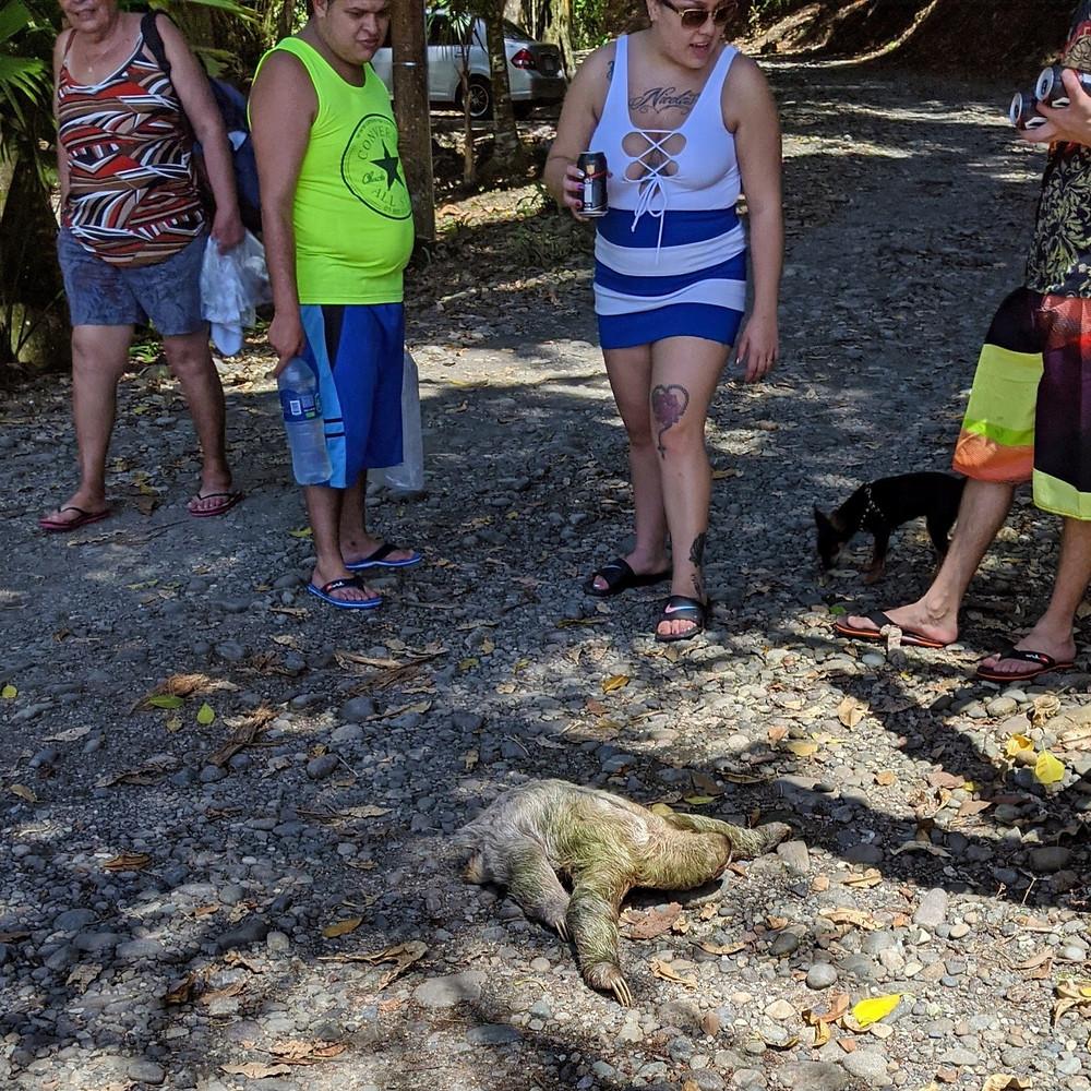Sloth and tourists.