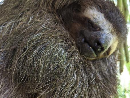 Be Productive Like a Sloth