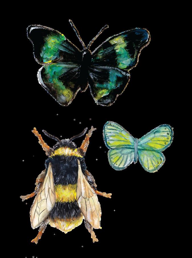 Bumblebee and Butterflies
