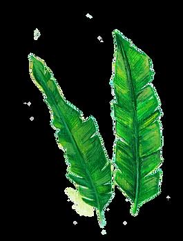 banana leaves.png
