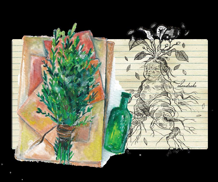 Mandrake and Herbs