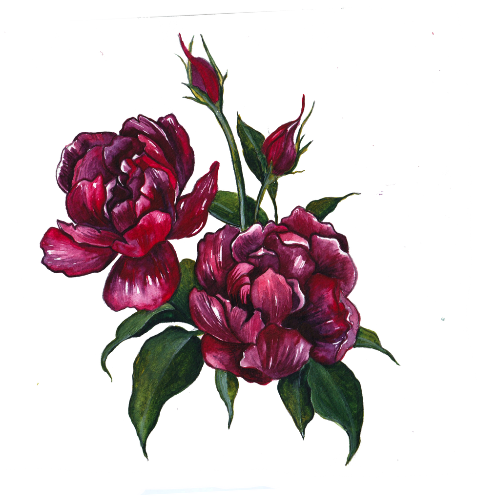 red flowers.png