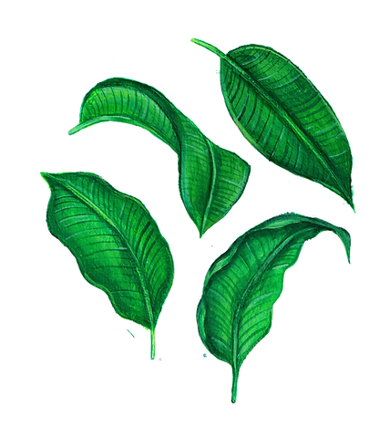 plantain leaves.png