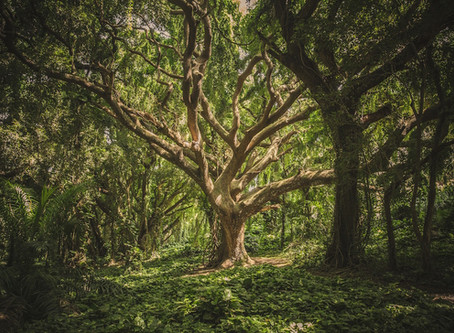 Your Yoga – Tree Pose (Vrksasana)