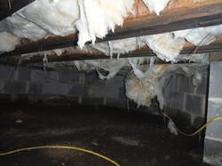 BEFORE: Mold & Fungi on floor joists