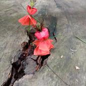 bricolage nature 2.jpg