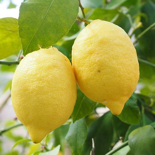 Citroen - lemon 10 ml