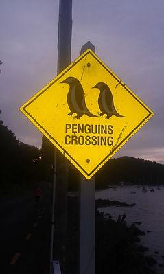 Penguins Crossing.jpg