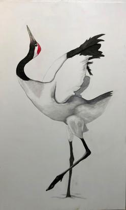Take Wing:Red Crown Crane