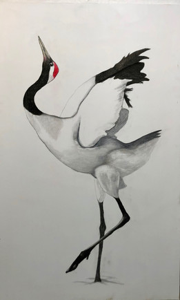 Take Wing: red crown crane