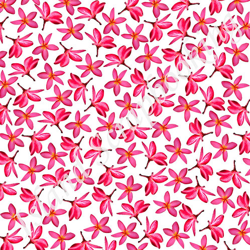 Plumeria with Light Pink Background