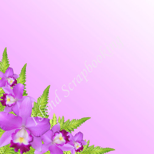 Purple Orchid Ombre