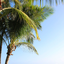 palm trees2