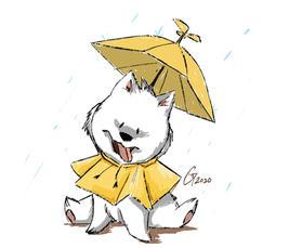 Samoyed in the Rain
