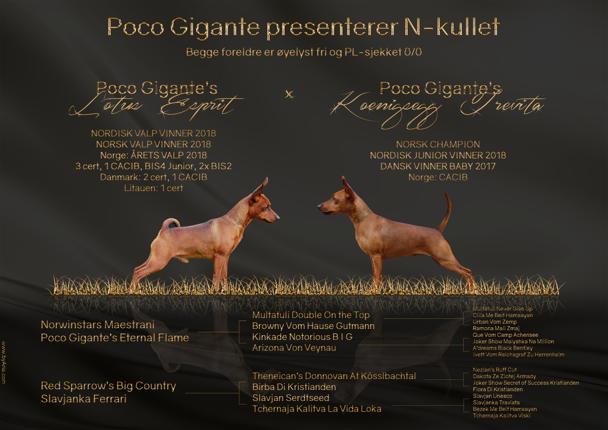 Presents-PocoGigante-N-byAria