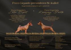 Presents-PocoGigante-N-byAria
