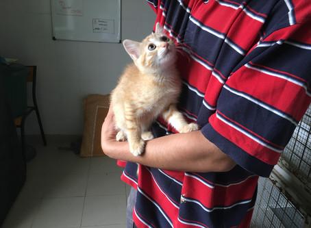 Adoptez !