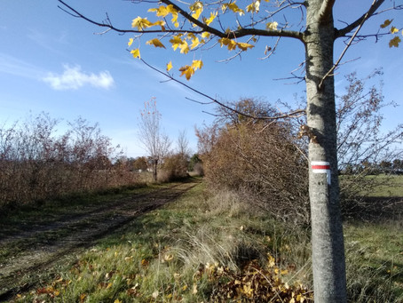 Rénovation du balisage des sentiers de randonnée
