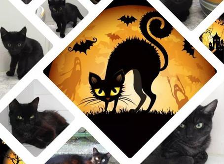 C'est aussi Halloween 🦇 au refuge !