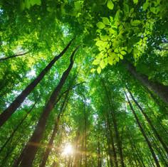 Bain de forêt.jpg
