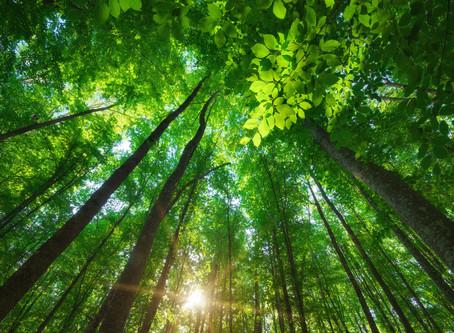 Les Bains de forêt