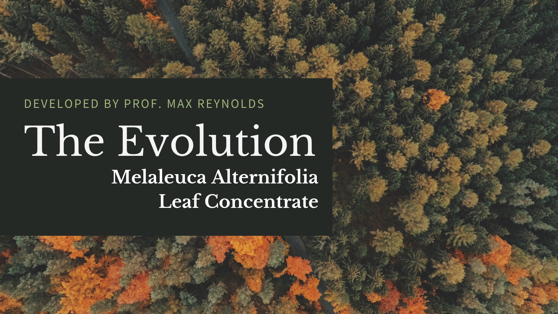 Evolution of Melaleuca Alternifolia