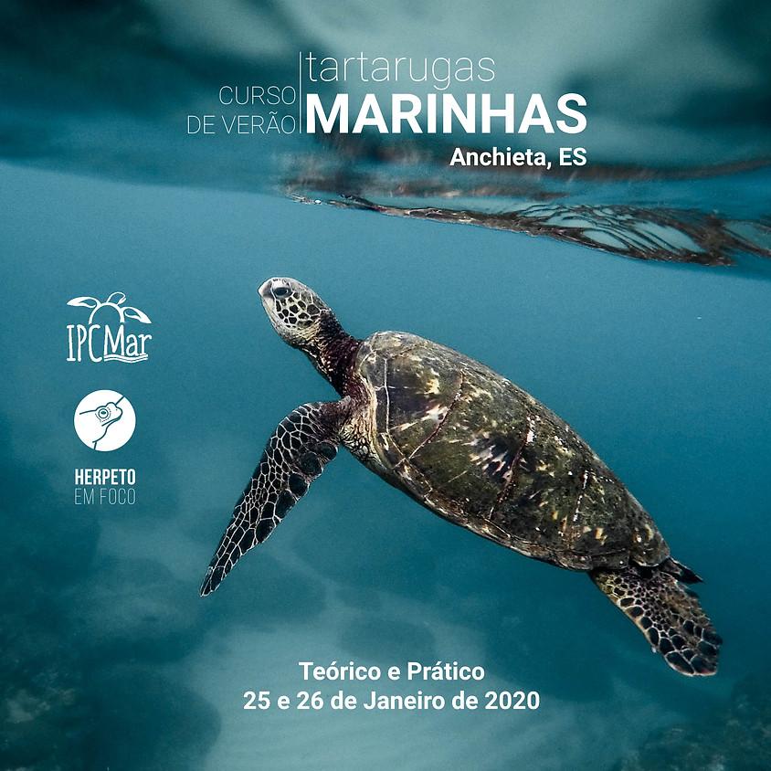Curso de Verão - Tartarugas Marinhas