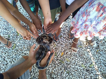 Ciranças perdendo o medo de serpentes