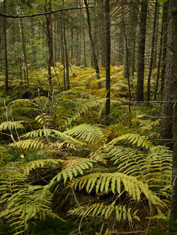 Bear Mountain Swamp