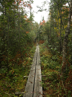 Bear Mountain Swamp Trail