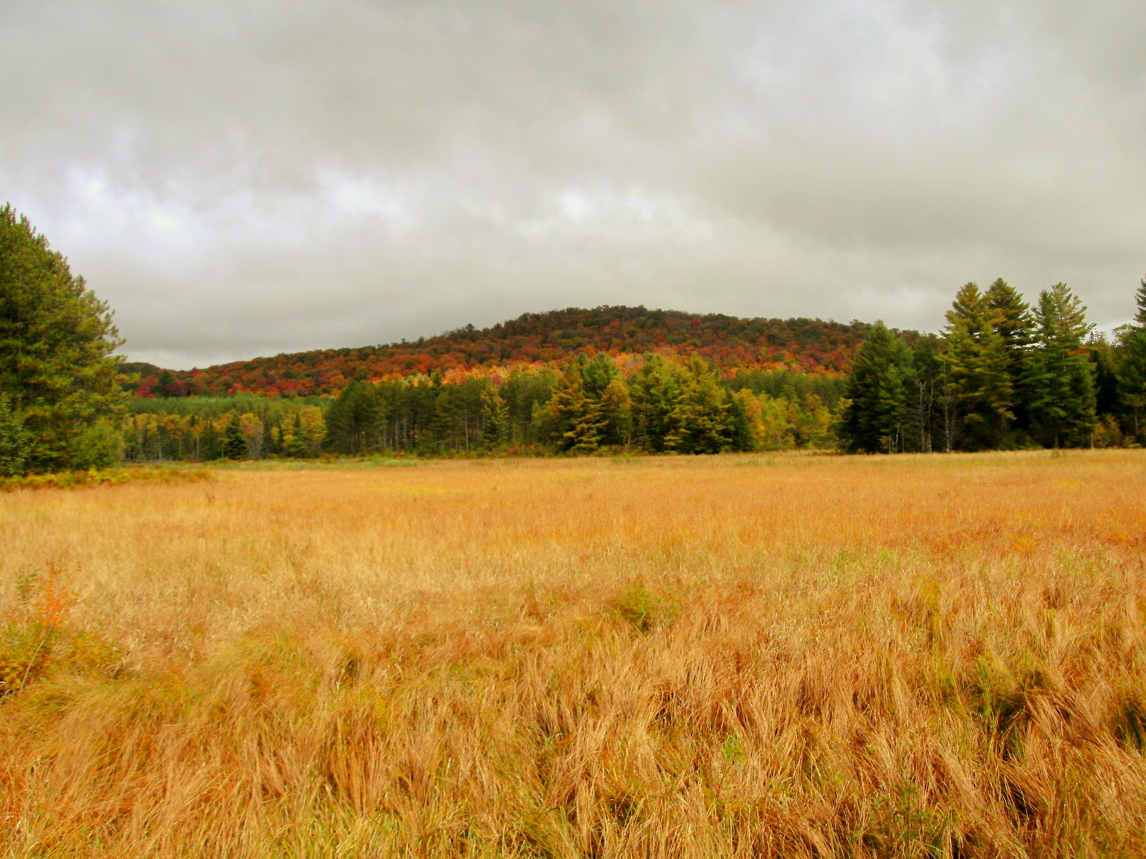 Autumn in Oswegatchie