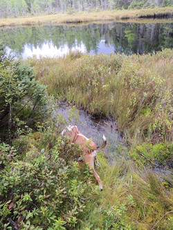 Big Pine Bog