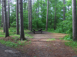 Greenwood Creek State Forest