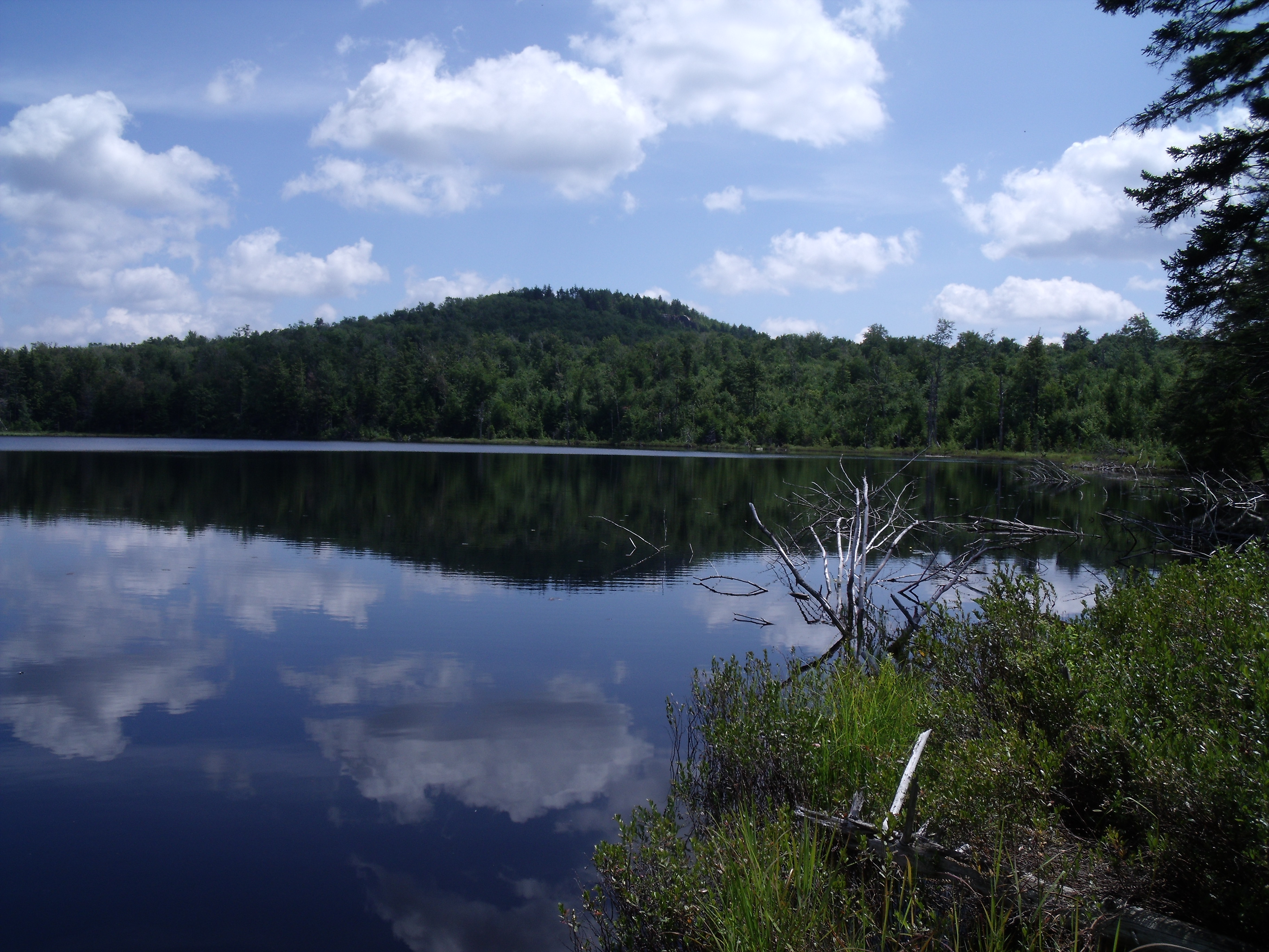Glasby Pond