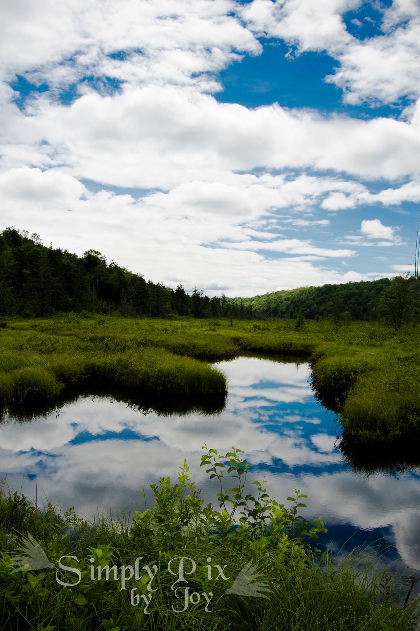 Aldrich Wild Forest