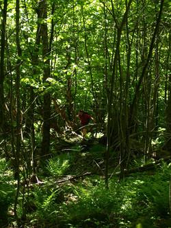 Streeter Mountain bushwack