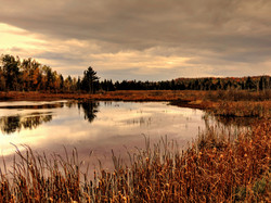 """Little River"" head waters Star Lake"