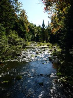 Dog Pond Loop Trail