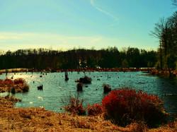 Small fishing pond along River Rd