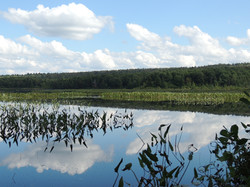 Sucker Lake