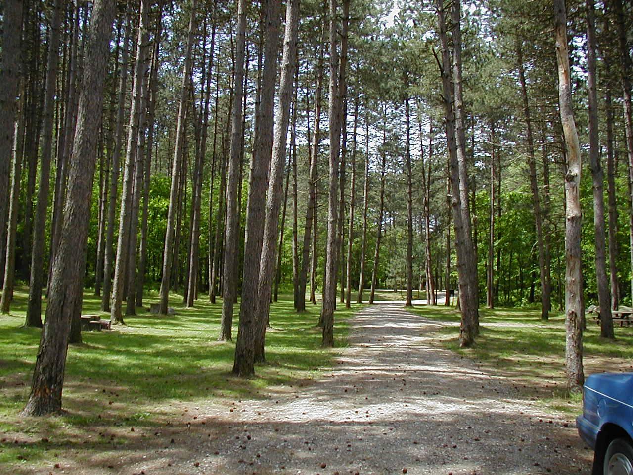 Greenwood Picnic Area