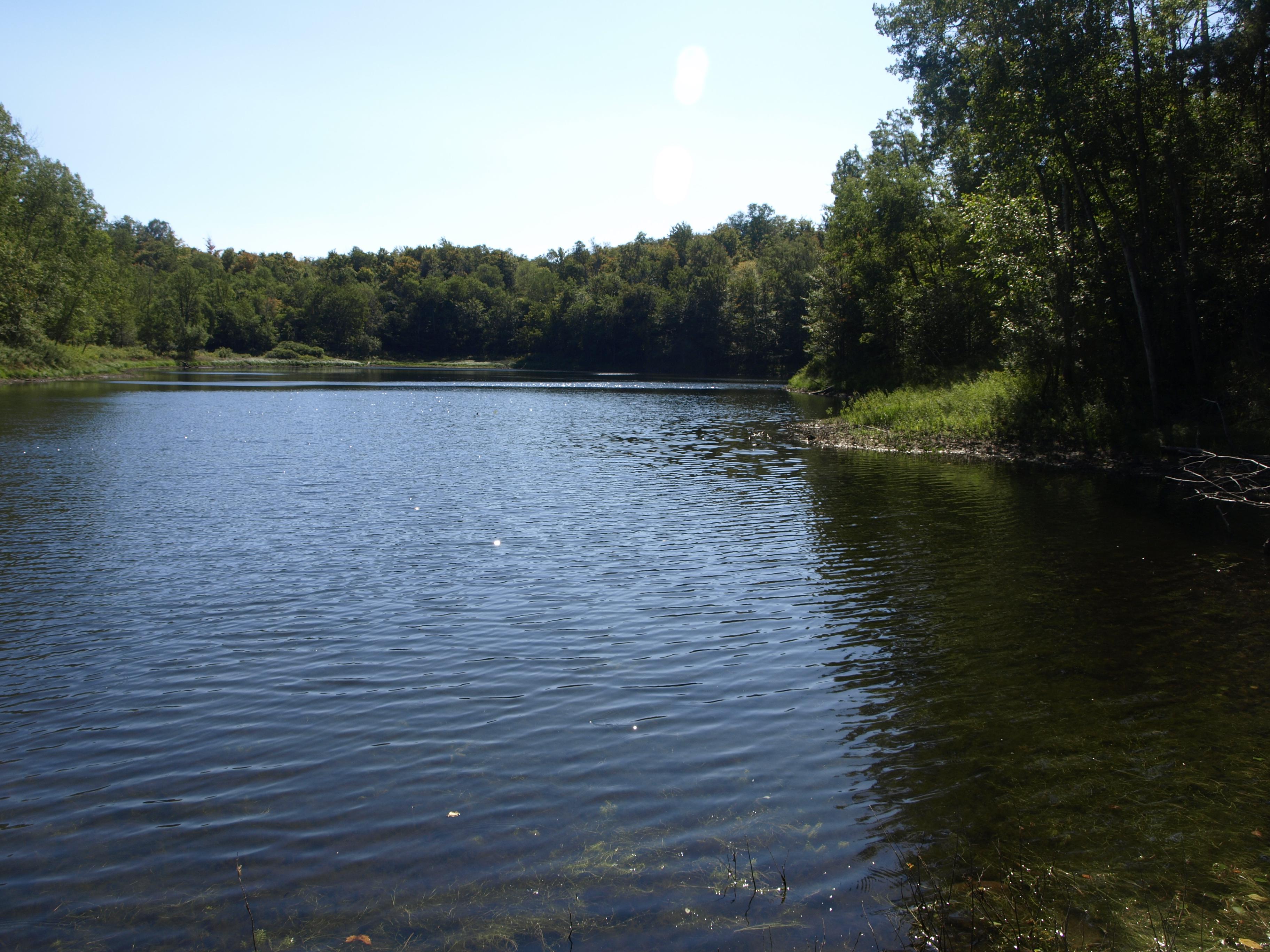 Readway Ponds
