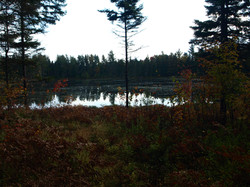 Balsom Pond