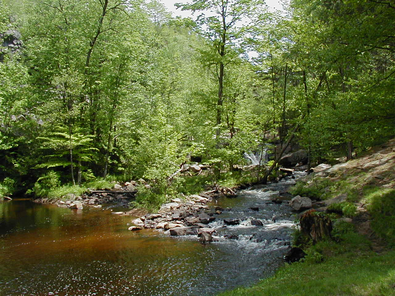 Greenwood Creek
