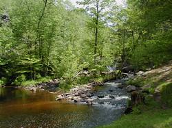 Greenwood Creek